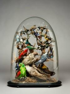 birdswebsite3