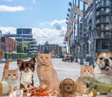 pets-in-the-city