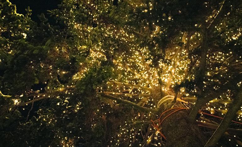 dublin-chritmas-lights-on-trees