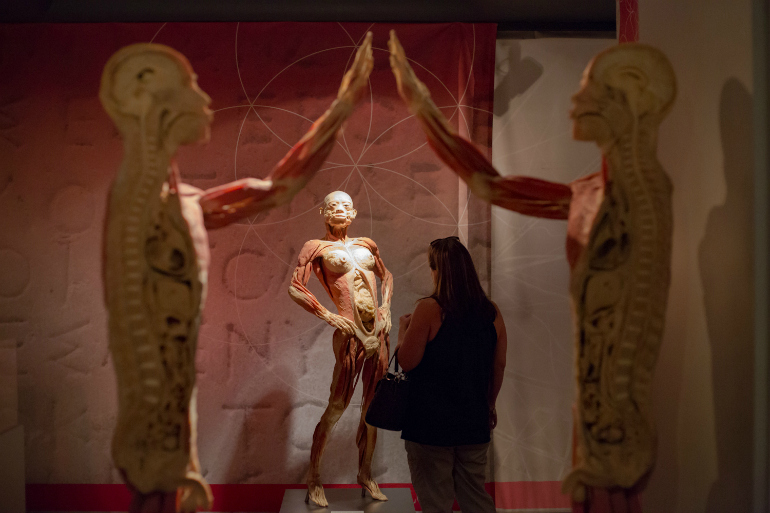 Real Bodies Exhibition Dublintown